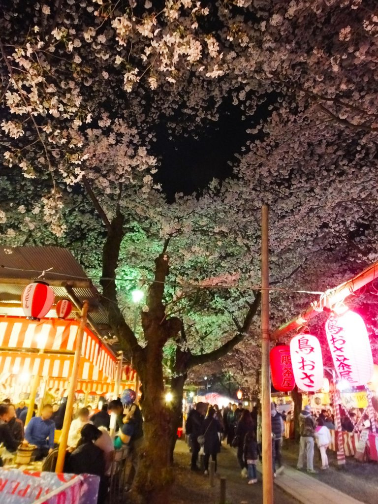 cherry blossoms in full bloom and places to eat and drink