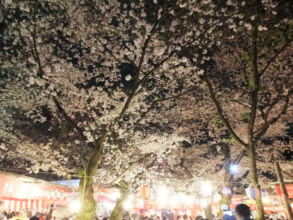 a ceiling of cherry blossoms