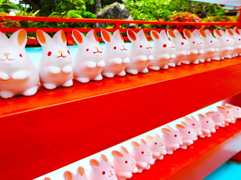 lots of rabbits in line