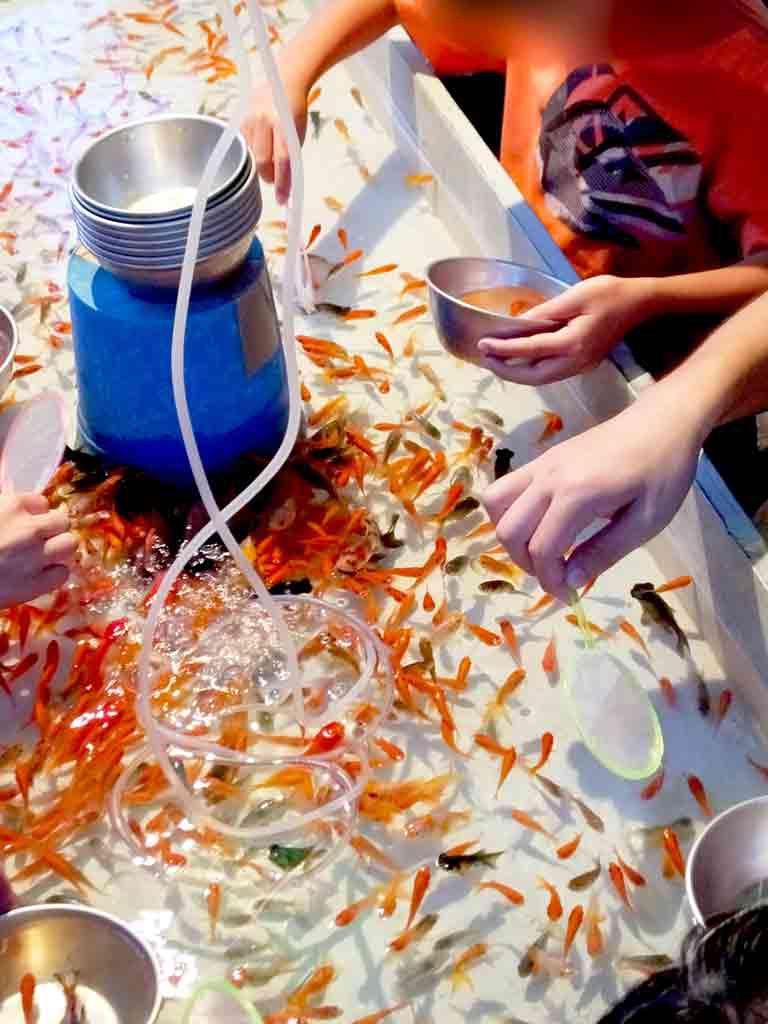 Goldfish-scooping)
