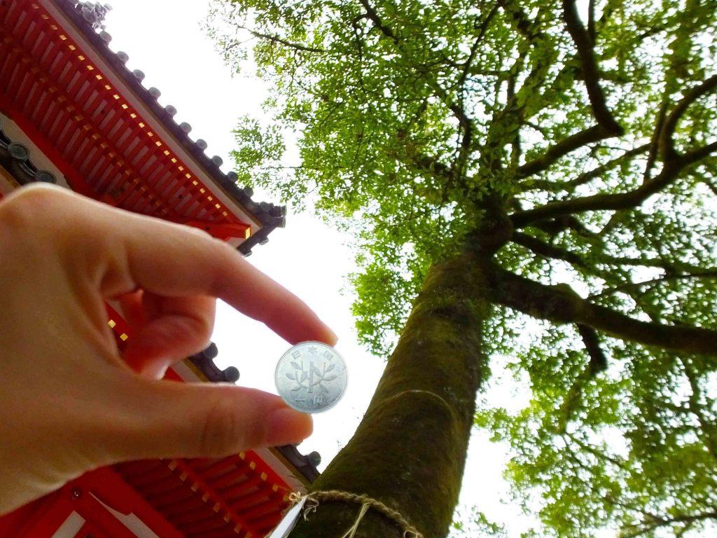 ogatama-no-ki and 1 yen coin