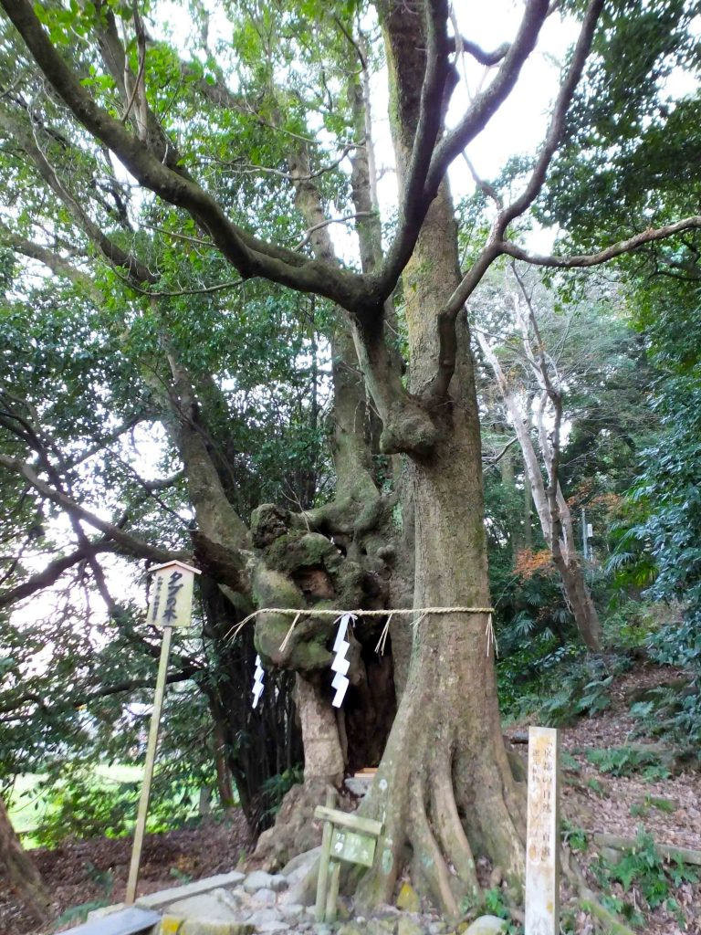 the old tree in Kora Shrine