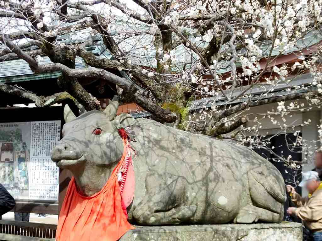 the cow statue under the ume tree)