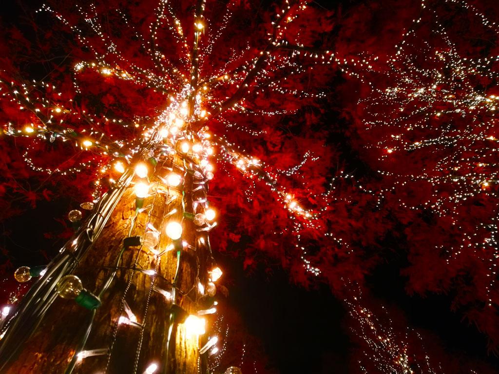 the illuminated trees