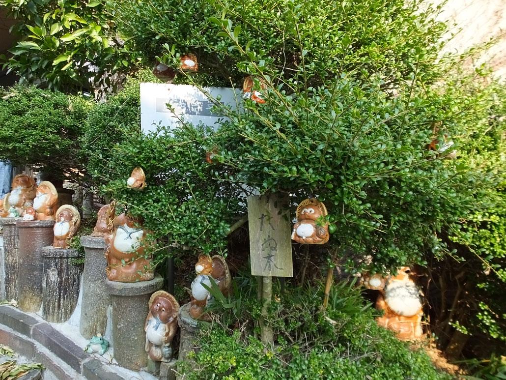 Tanuki-bearing Tree near the cafe